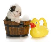 čas koupele štěně — Stock fotografie
