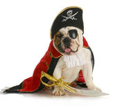 Dog pirate — Stock Photo