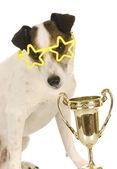 Champion dog — Stock Photo