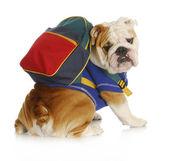 Dog obedience school — Stock Photo