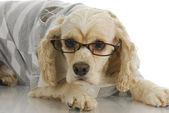 ładny pies w okularach — Zdjęcie stockowe