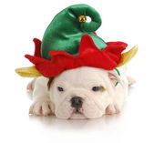 Puppy elf — Stock Photo