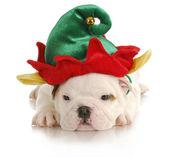Puppy elf — Stock Photo