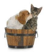 Puppy and kitten — Stock Photo