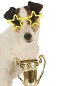 Cão campeão — Fotografia Stock