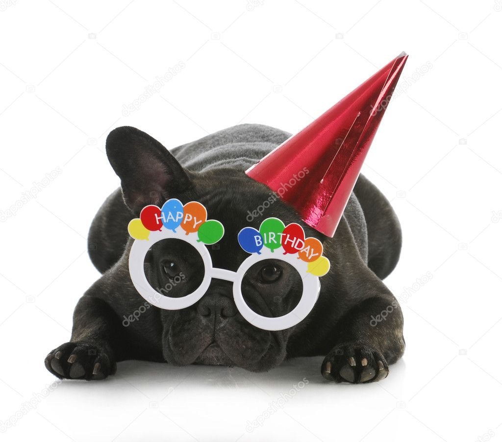 Happy Dog Birthday Birthday Dog French Bulldog