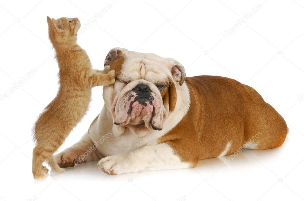 Cute cat and dog photos
