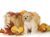 Puppy in autumn setting — Stock Photo