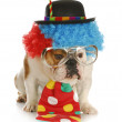 Dog dressed like a clown — Stock Photo #13910539