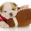 Puppy with football — Stock Photo #13915733