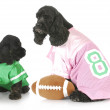 Sports hounds — Stock Photo #13917579