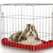 Dog in a crate — Stock Photo
