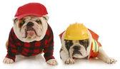 Рабочие собаки — Стоковое фото