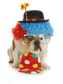 Dog dressed like a clown — Stock Photo