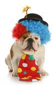 Dog dressed like a clown — Stock Photo
