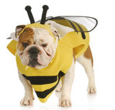 Dog dressed like a bee — 图库照片