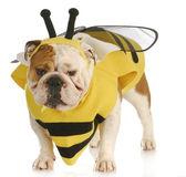 蜂のような服を着て犬 — ストック写真