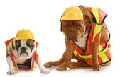 Working dogs — Stock Photo