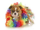 Bailarina de hula cachorro — Foto de Stock
