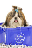 Puppy in recycle bin — Stock Photo