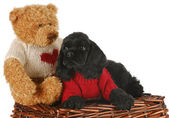 Puppy with bear — Stock Photo