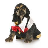 正规的小狗 — 图库照片