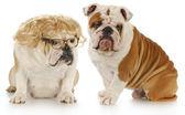Dog couple — Stock Photo