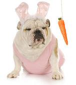 Easter dog — Stock Photo
