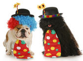 Hond clowns — Stockfoto