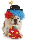 Dog clown — Stock Photo