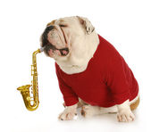 Musical dog — Stock Photo