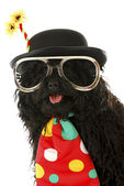 Dog clown — Stockfoto