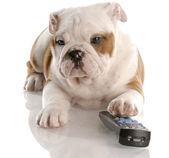 Puppy and remote — Stock Photo