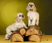Puppies climbing on wood — Stock fotografie
