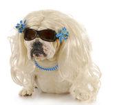 雌犬 — ストック写真