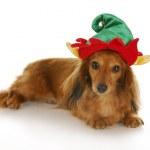 Santa's helper — Stock Photo #13920925