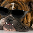Cool dog — Stock Photo #13922473