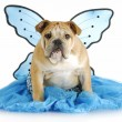 Dog angel — Stock Photo
