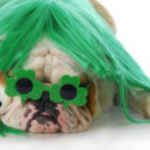 St patricks day dog — Stock Photo #13923179