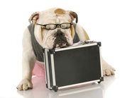 Overworked dog — Stock Photo