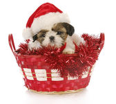 Christmas puppy — Stock Photo