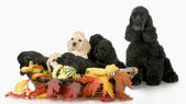 Cucciolata di cuccioli — Foto Stock
