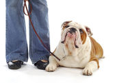 Dog obedience training — Stock Photo