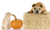 Halloween puppy and kitten — Stock Photo