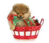 Cachorro de navidad — Foto de Stock
