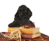 Puppy with books — Stock Photo