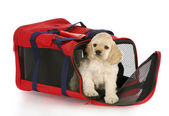 Puppy in a dog crate bag — Stock Photo
