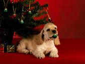 Cute christmas puppy — Stock Photo