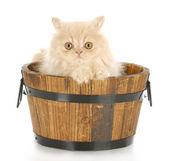 čas koupele kotě — Stock fotografie