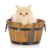 Kitten bath time — Foto de Stock